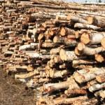 La Bistra, administratorul une firme a fost amendat cu 5000 de lei pentru comerț ilegal cu material lemnos