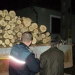 Bărbat din Bistra cercetat penal după ce a tăiat fără drept 14 arbori de pe un teren comuna Lupşa