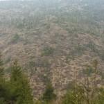 Manifest pentru drama pădurilor României