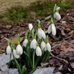 Mesaje de 1 martie 2014. Ce sms-uri, felicitări şi mesaje puteţi trimite cu ocazia venirii primăverii? | campeniinfo.ro
