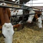 Beneficiarii subvenţiilor din sectorul zootehnic nu vor mai restitui sumele încasate de la APIA