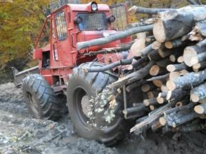 taf-lemne