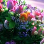 Obiceiuri, superstiţii și tradiții de Florii: Ramurile de salcie sunt așezate înainte de culcare sub pernele fetelor nemăritate | campeniinfo.ro