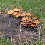 """Sate din comuna Arieşeni, """"invadate"""" de culegătorii de ciuperci din Bihor"""