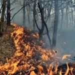 9 hectare de teren mistuite de flăcări, în urma unui incendiu de vegetație uscată izbucnit la Poșaga