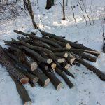 Poliţiştii din Sălciua îl cercetează pe un bărbat din comună, care ar fi tăiat fără drept 49 de arbori creând un prejudiciu de 49.600 lei
