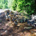 Dosar penal pentru un bărbat de 68 de ani din Sălciua după ce a tăiat ilegal mai mulți arbori