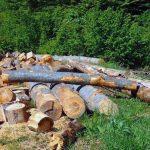Dosare penale pentru doi bărbați din comuna Ocoliș, după ce au tăiat arbori nemarcați
