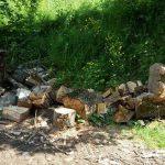 Bărbat de 51 de ani din Ocoliș cercetat penal pentru tăiere ilegală de arbori