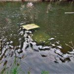 Șofer inconștient amendat cu 5000 de lei, după ce s-a scufundat cu o mașină 4×4 într-un râu din Munții Apuseni