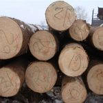 Dosar penal pentru un bărbat de 47 de ani din Alba după ce a tăiat fără autorizație zece arbori din specia molid