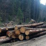 Bărbat de 43 de ani din Lupșa cercetat de polițiștii din Baia de Arieș, după ce a sustras material lemnos din rampa de depozitare a unui composesorat silvic