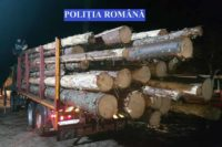 Polițiștii din Câmpeni au confiscat 31 de metri cubi de material lemnos, în urma unui control în trafic